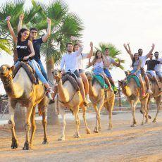 Camel Park Tenerfe. Camel walk, goats, donkeys, parrots, horses