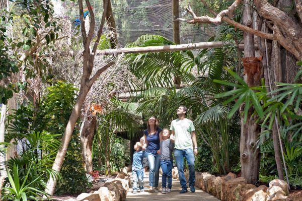 JUNGLE PARK, jungle park, show, arona, tenerife, cheap, lowcost, eagle, falcon, nature, parrots, donkey, offer, , , , ,